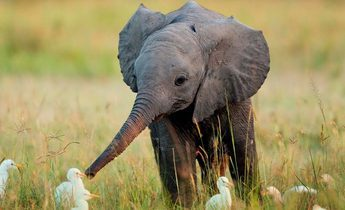 Aside little elephant