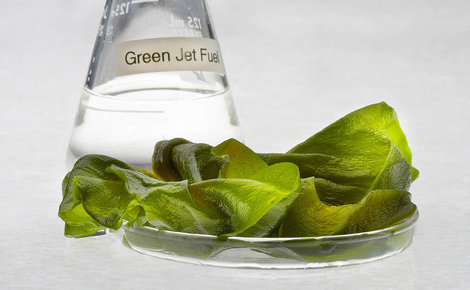 Sidebar algae fuel in a beaker