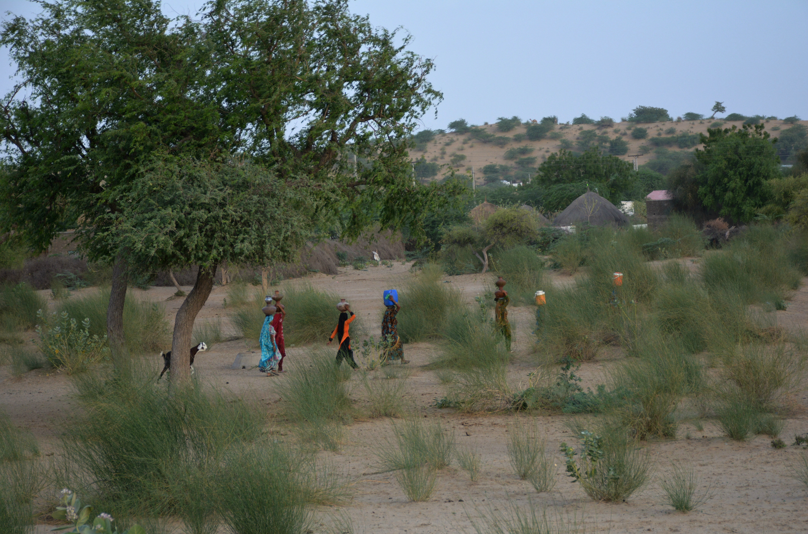 residents walking through Thar desert