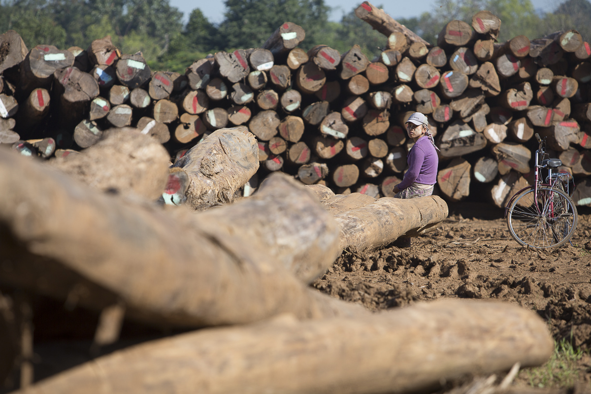 Illegal logging across the border to China and India is a major threat to Myanmar forests