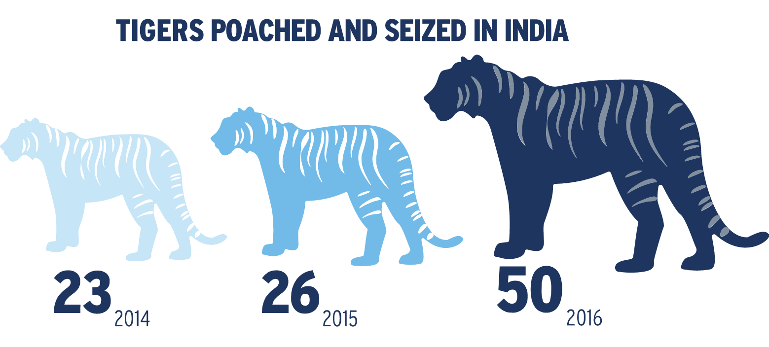 Tigers poached and seized in India