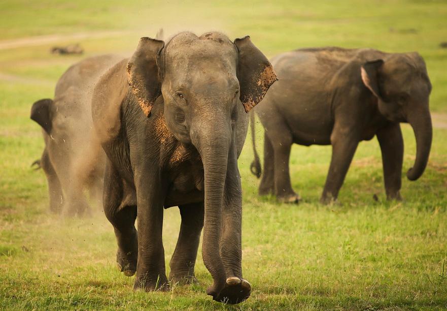 elephant running through grass