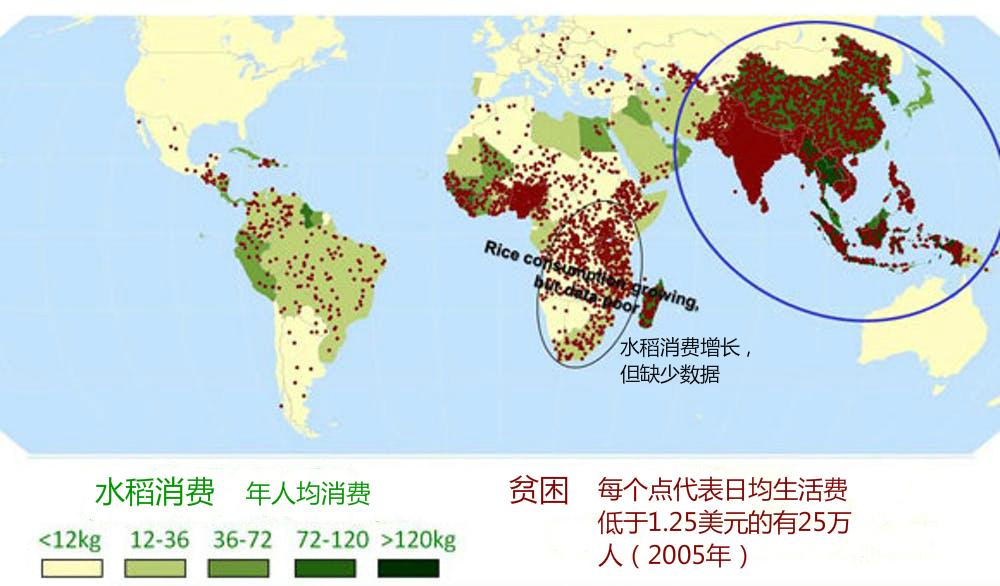亚洲许多极端贫困地区都以水稻为主食