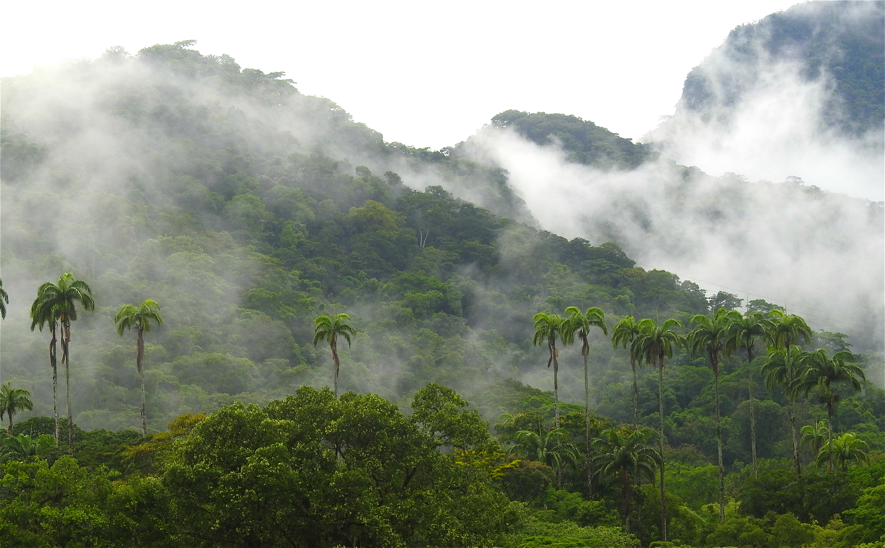Moisture produced by the world's forests generates rainfall thousands of miles away. (Image: Felipe Süssekind)