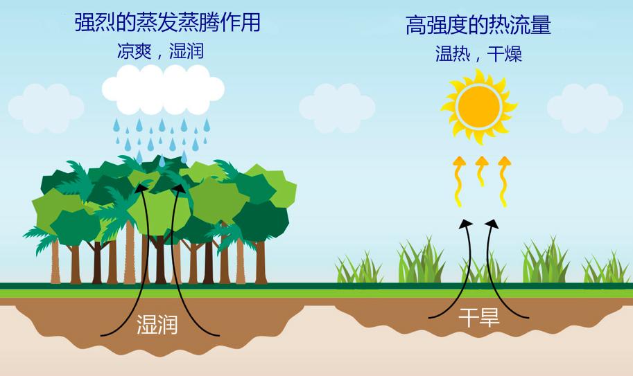 树木通过根系从土地中吸取水分,再通过树叶的气孔将水分蒸发到大气中。