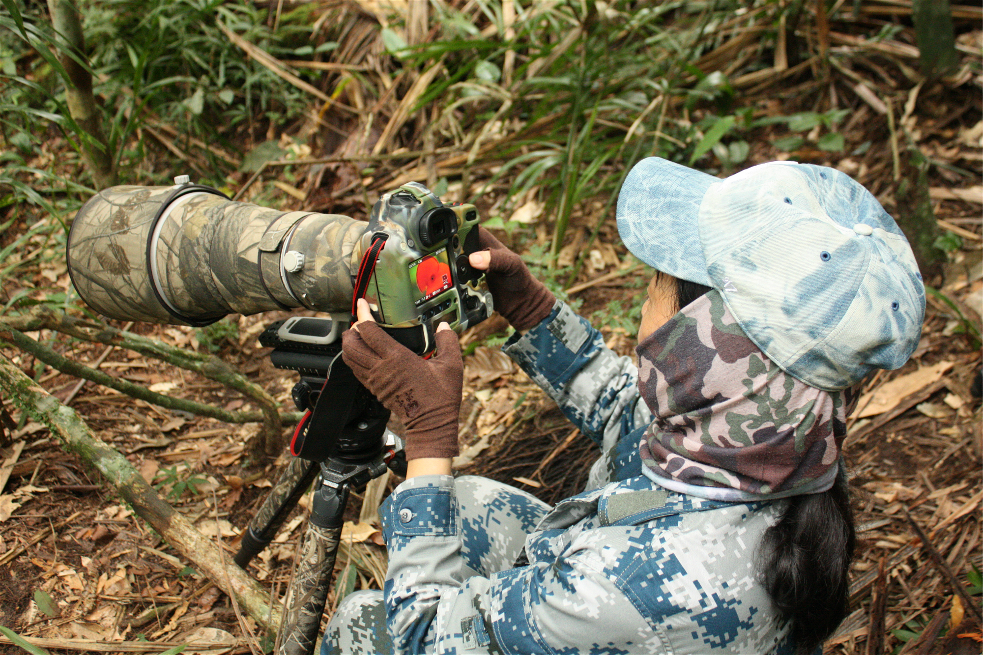 Chinese ecotourists in hunt for Colombia's rare cock-of-the