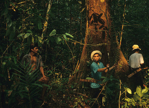 Members of the Kenyah Dayak indigenous group conducting forest surveys in Western Borneo in the early 1990s. CHARLES PETERS