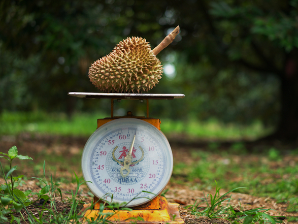 durian on weightscale.png