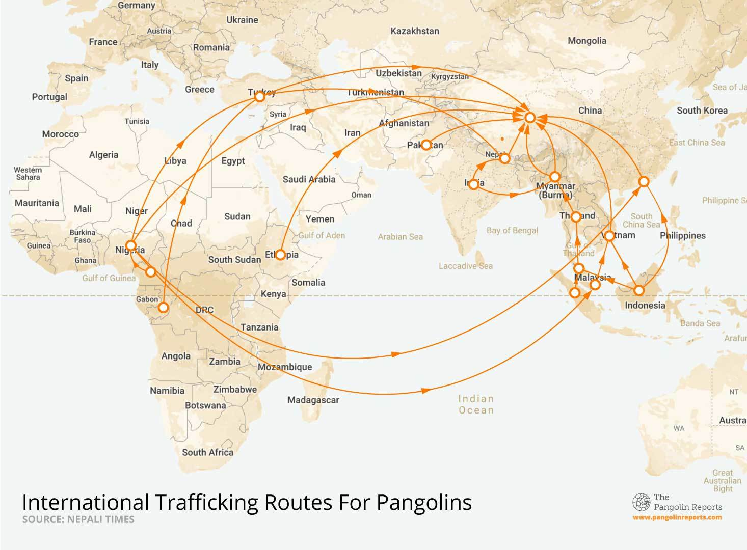 This map depicts the international routes used to traffic pangolins, spanning mostly within Africa and Asia.