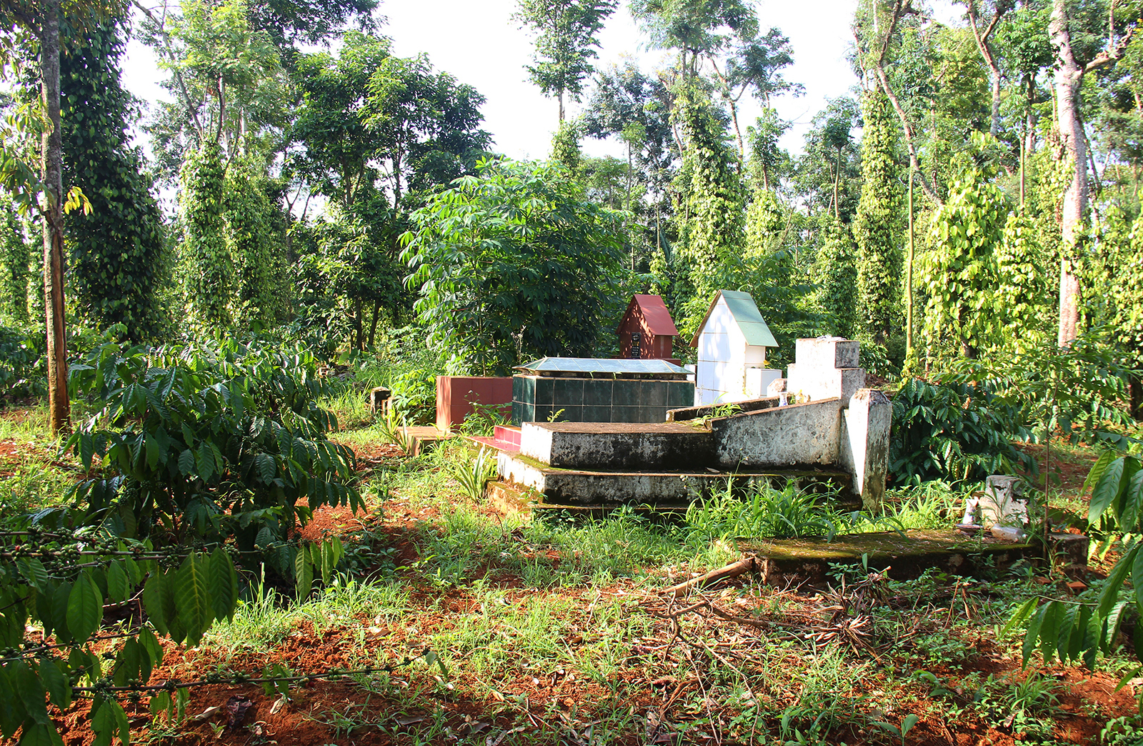 Y Bel Eban's coffee farm inherited from his grandparents is also a family cemetery.