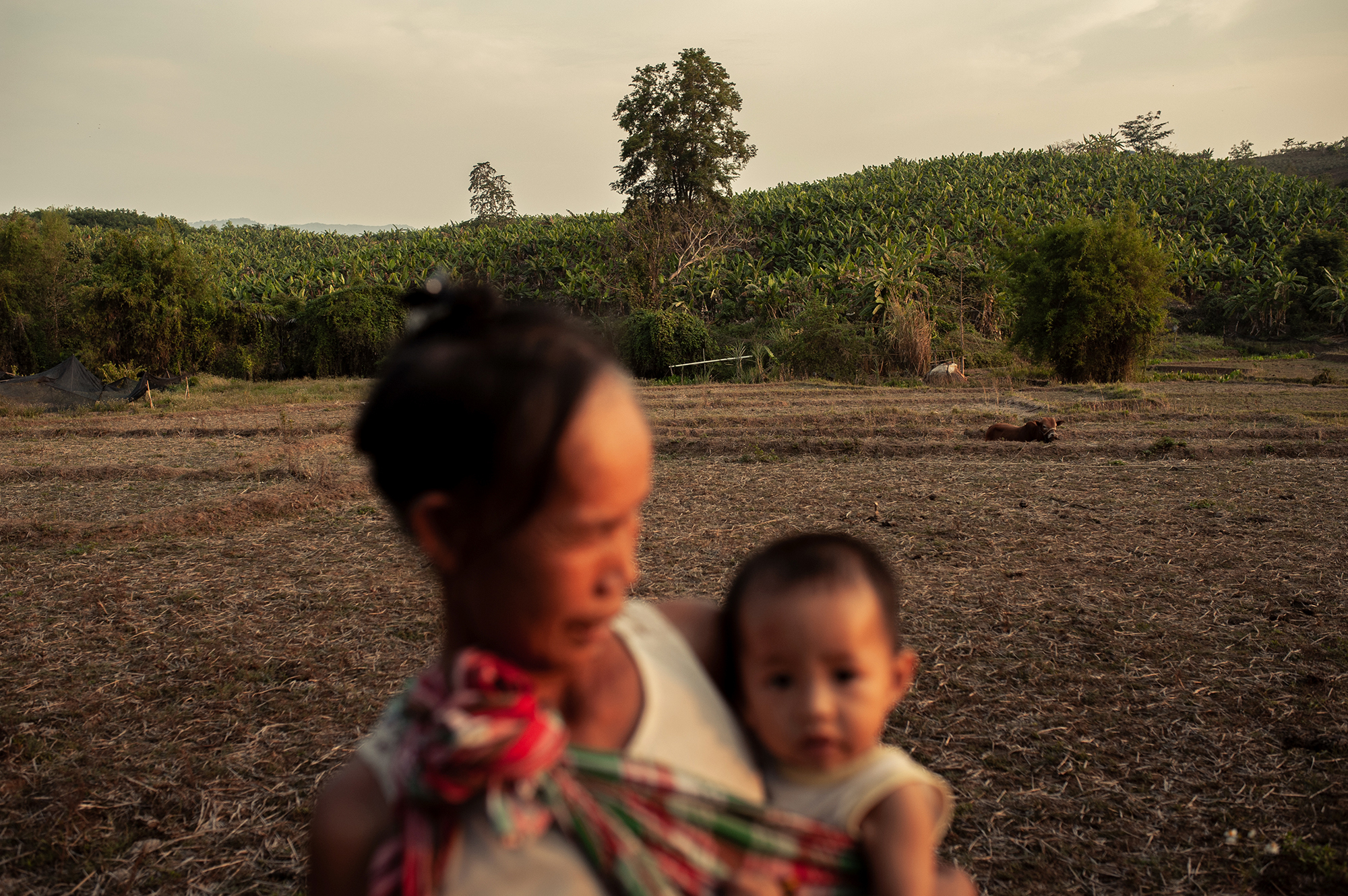 Tiam holds her grandchild in front of the banana plantation that she rents out to the Chinese investor 5 years ago, in Bokeo district for 78 dollars per rai per year. (Image: Visarut Sankham/China Dialogue)