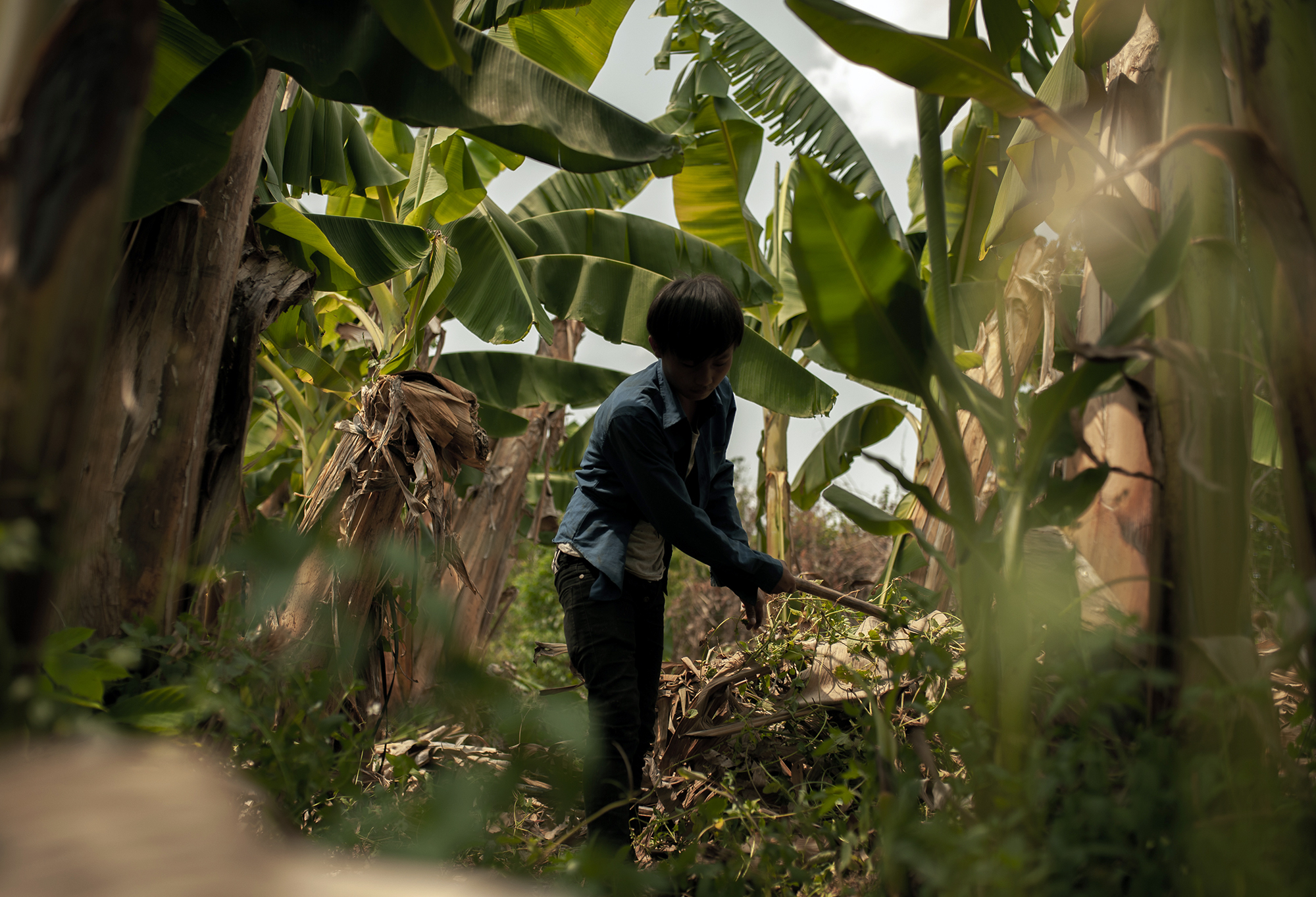 16-year-old Ton removes weed in the plantation. Having worked in banana plantations for more than 4 years, he wants try the factories in Thailand but cannot afford the visa. (Image: Visarut Sankham/China Dialogue)