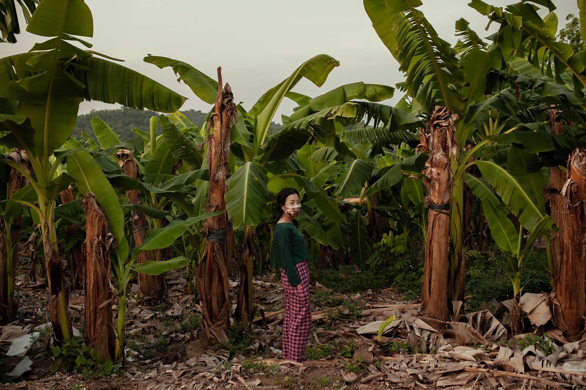 17-year-old Pie was a grade 10 student when she decided to leave school to look for work in the banana plantation (Image: Visarut Sankham/China Dialogue)