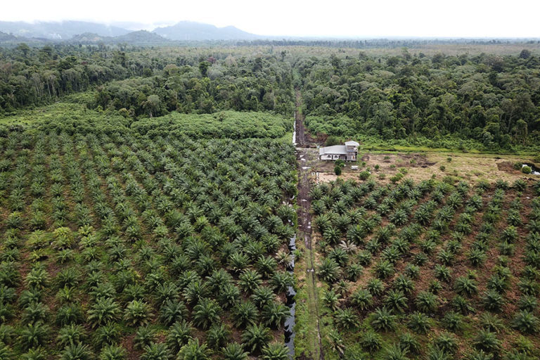 An oil palm plantation in Rawa Singking Wildlife Reserve, an ostensibly protected area