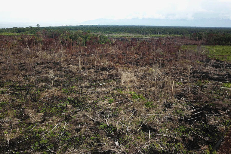 Encroachment and forest clearing for a plantation in Rawa Singkil Wildlife Reserve