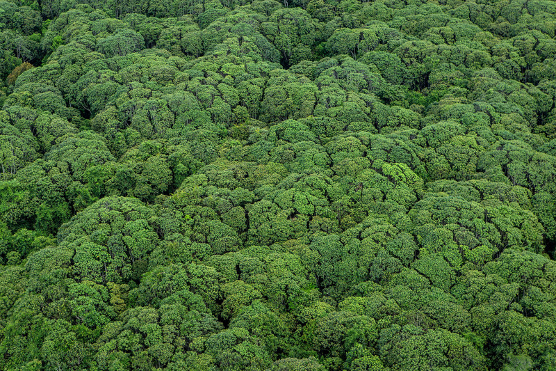 peatland forest canopy