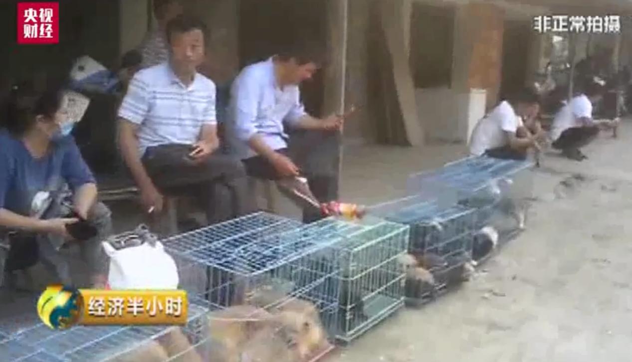 中央电视台隐蔽拍摄的蔡荡桥地下宠物市场一角