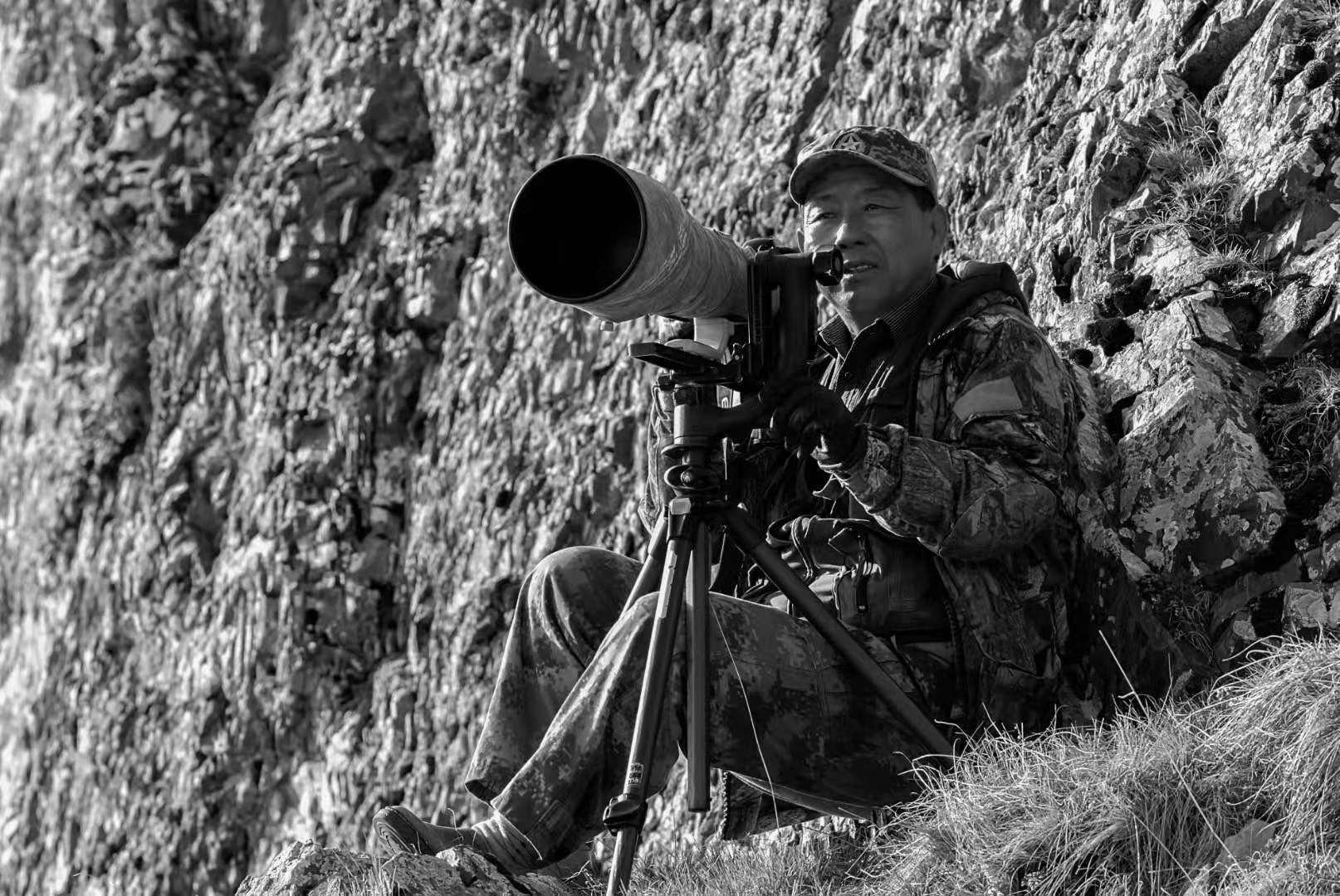 bao yongqing, photographer of Tibetan fox