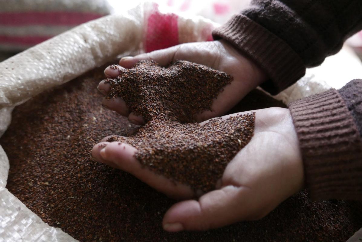 maca powder from peru