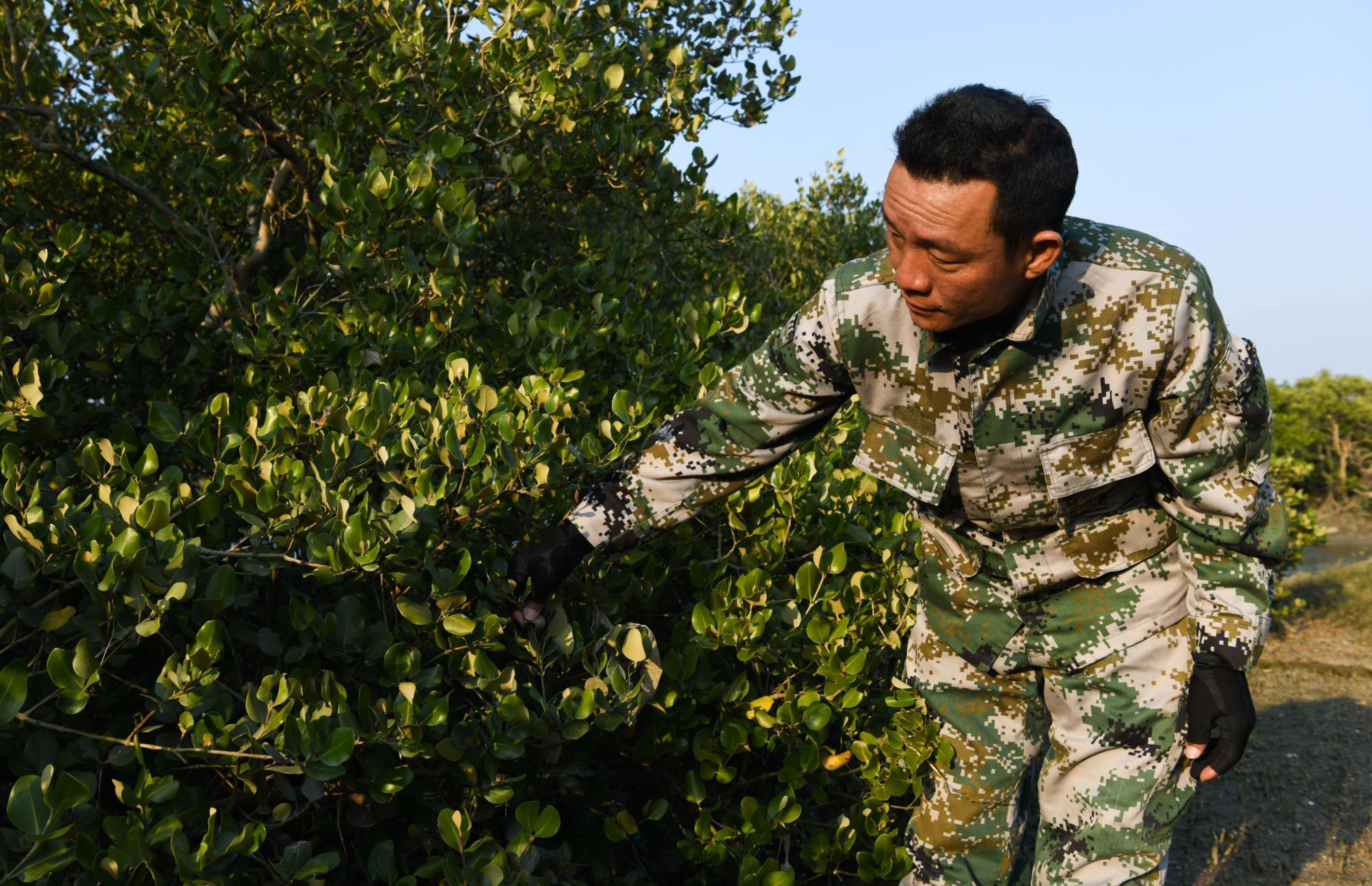 mangrove forests china, nature based solutions in china, carbon sink