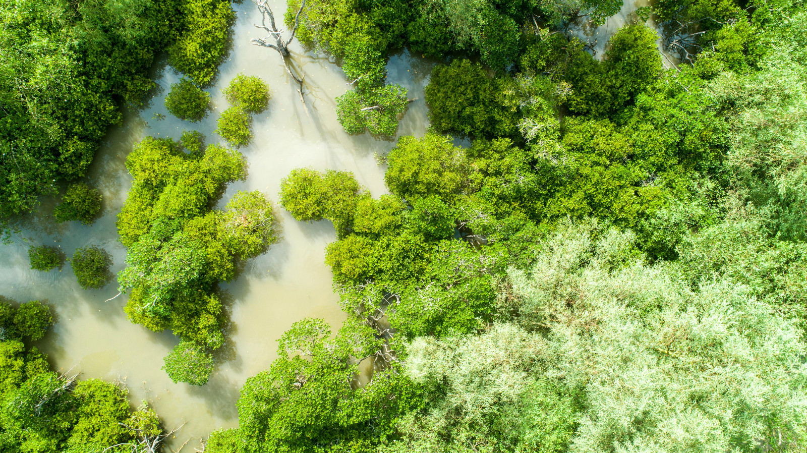 mangrove forest aerial photo china, nature based solutions