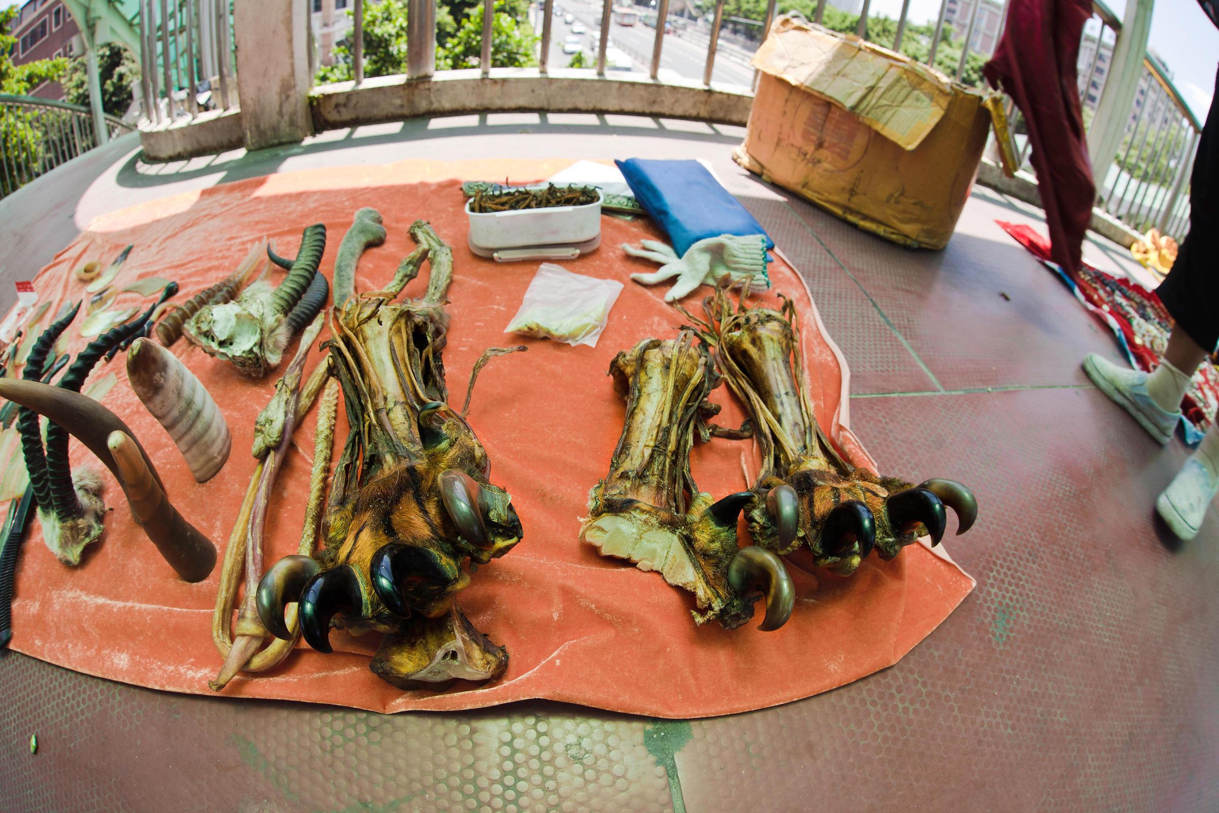 广州街头违法出售虎骨