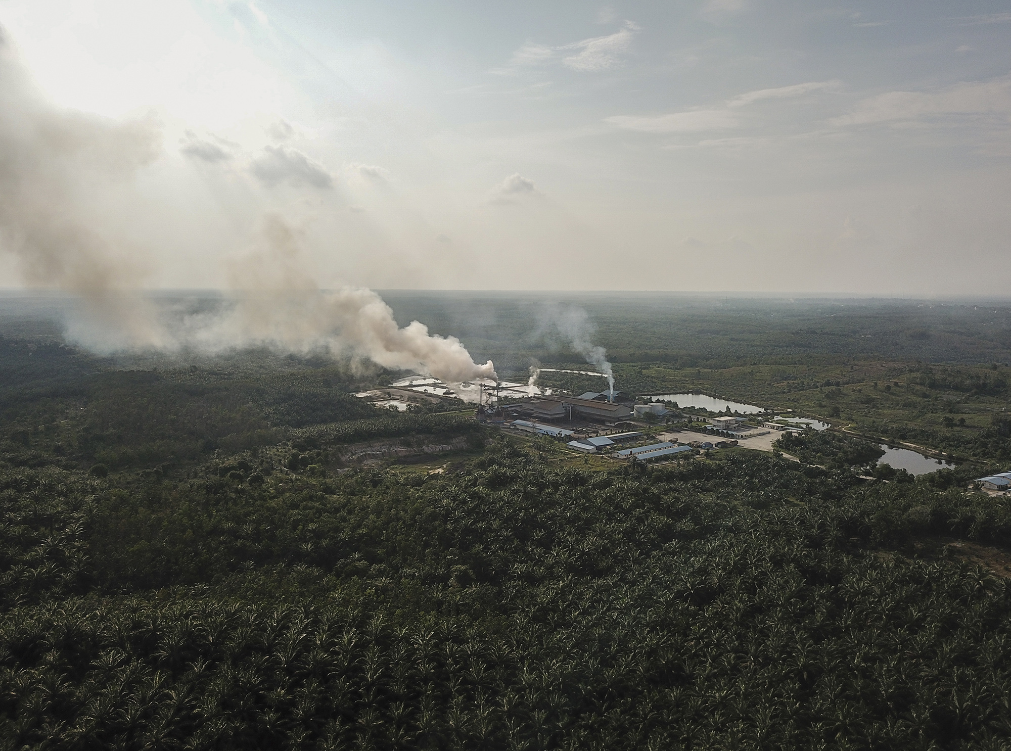 A palm oil processing mill surrounded by oil palm in Bengkalis