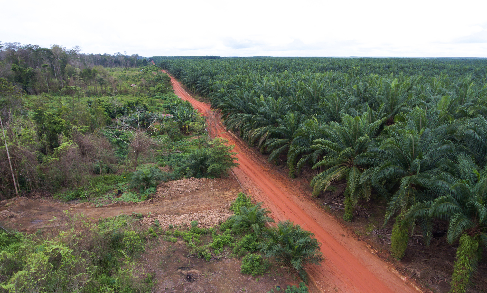 An oil palm plantation bordered by the rainforest it has replaced in Indonesia's Papua province