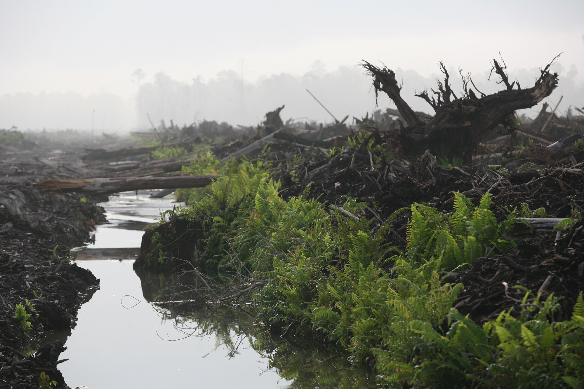 A canal draining peatland for palm oil plantations on the Indonesian island of Sumatra
