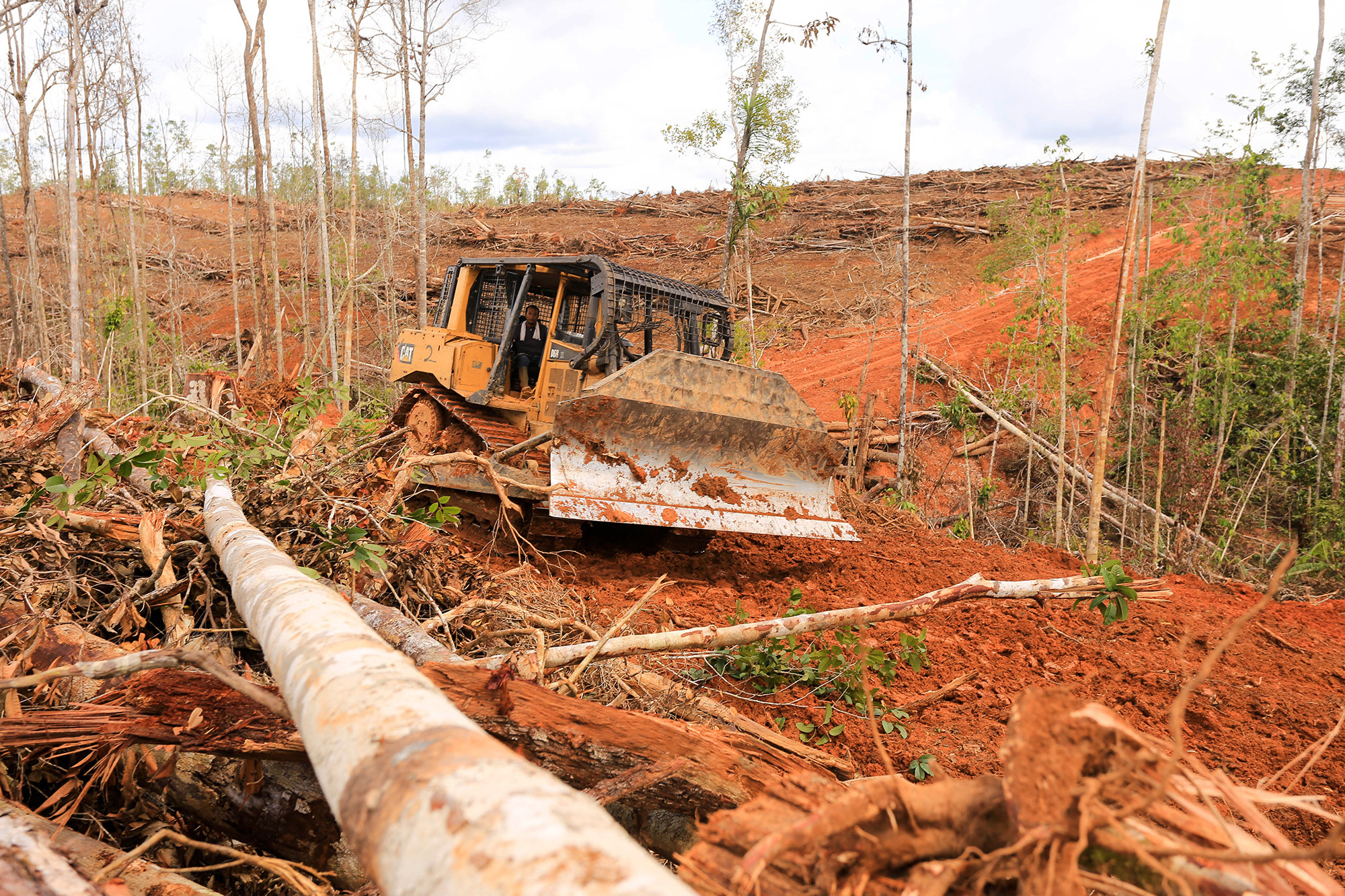 Land being cleared for oil palm plantations in Indonesia