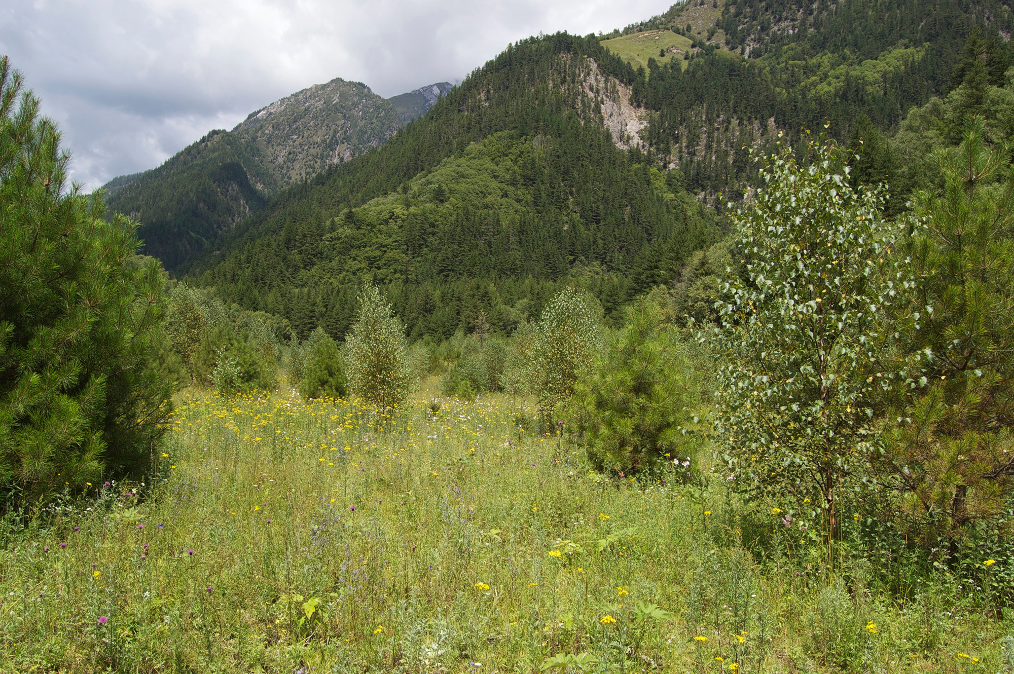 meadow and conifer trees in jiuzhaigou nature reserve, sichuan