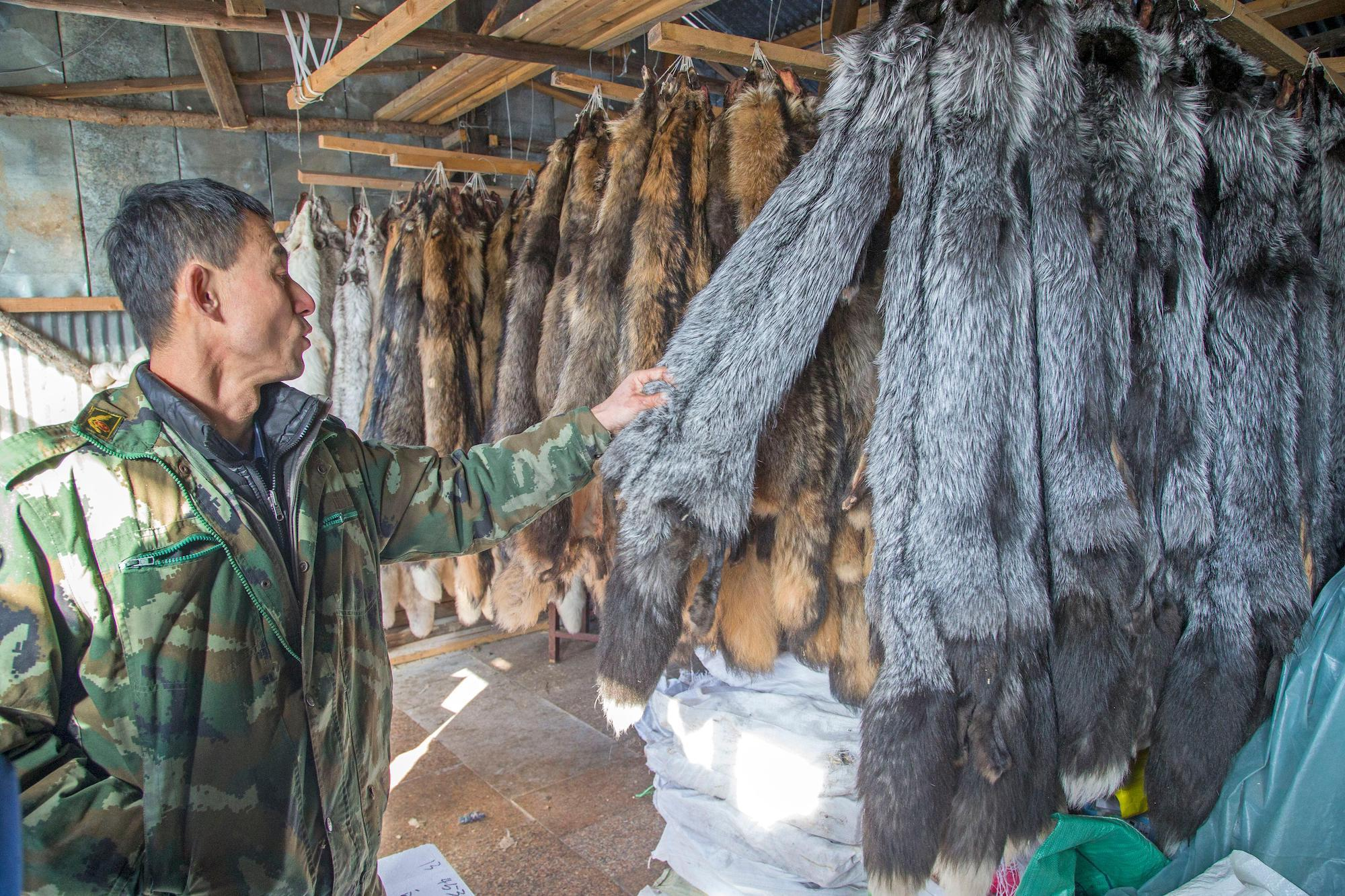 furs for sale at a fox farm in Heilongjiang, china