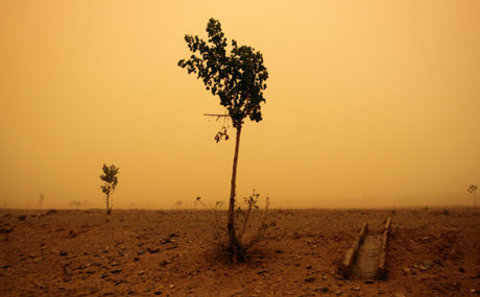 Main desert eleven