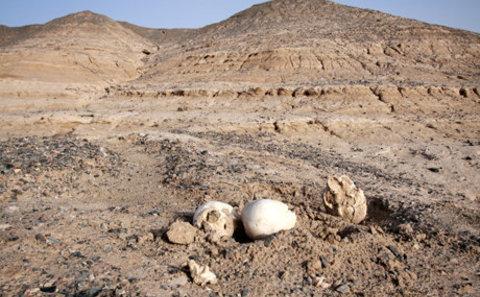 Main desert nineteen