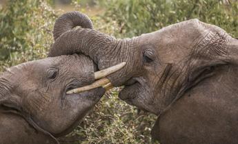 Aside gr elephant kenya 75 meitu 3