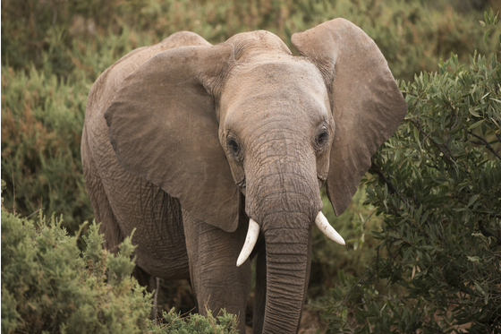 Main gr elephant kenya 29 meitu 4