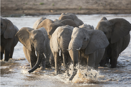 Main gr elephant kenya 138 meitu 1