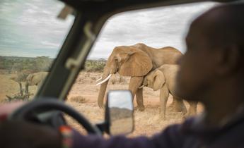 Aside gr elephant kenya 40 meitu 2