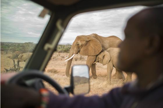 Main gr elephant kenya 40 meitu 2