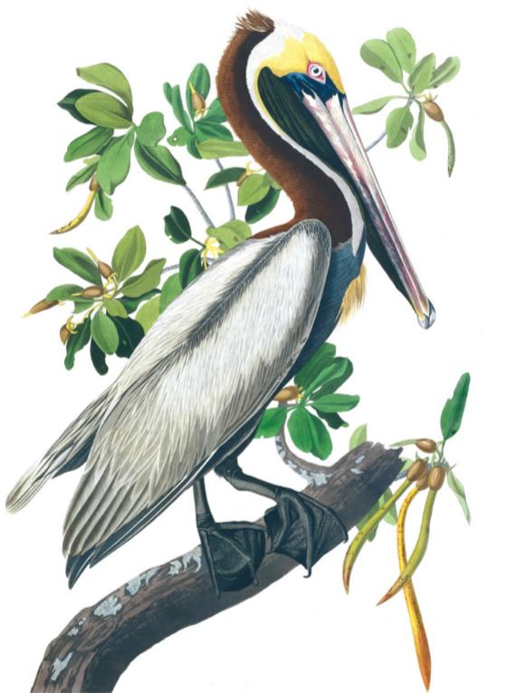 Main 123 pelican meitu 2