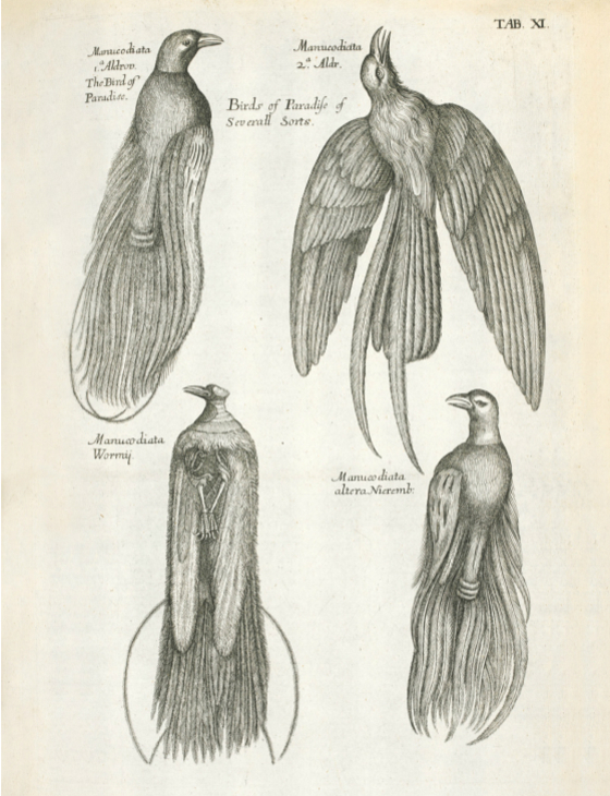 Main 100 birds of paradise meitu 5