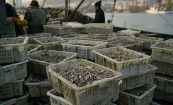 Aside fishing for fish feed 1 cropped