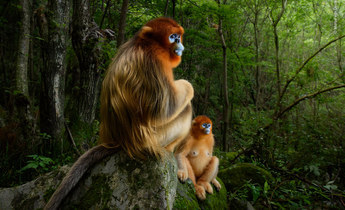 Aside   marsel van oosten   wildlife photographer of the year