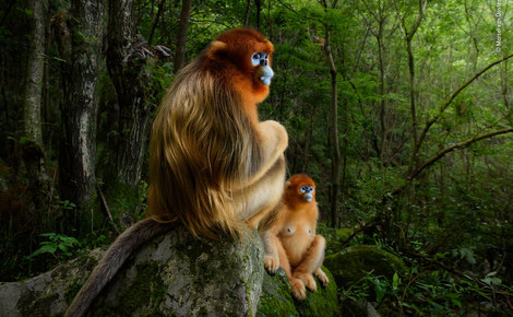 Homepage   marsel van oosten   wildlife photographer of the year