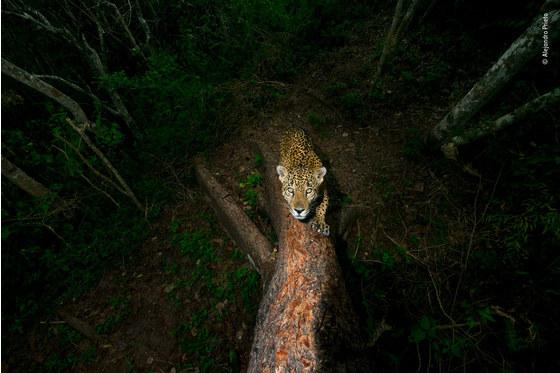 Main   alejandro prieto   wildlife photographer of the year