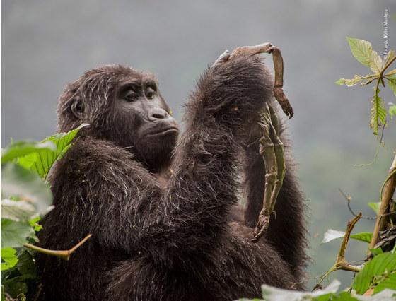 Main   ricardo nu n ez montero   wildlife photographer of the year