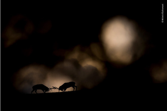 Main   michel d oultremont   wildlife photographer of the year