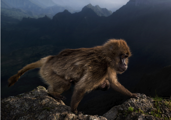Main   riccardo marchegiani   wildlife photographer of the year web