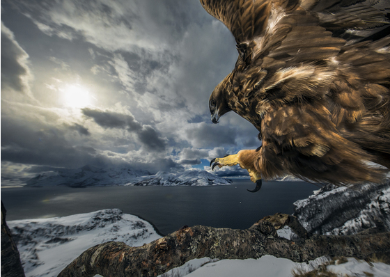 Main   audun rikardsen   wildlife photographer of the year web